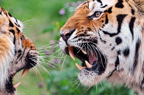 An argument... by Tambako on Flickr